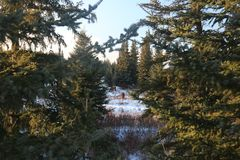 Winter fir landscapes horses Stock Images