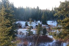 Winter fir landscapes horses stock photo