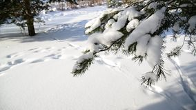 Winter fir park on sunny day stock video footage