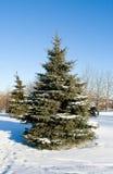 Winter fir tree Stock Photos