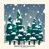 Winter fir tree collection. Winter snow fir tree collection with snowflakes. Vector Stock Image