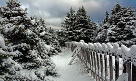 Winter Fir Trees and Snow Canada Royalty Free Stock Images