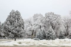 Winter fir trees and trees snowy landscape in winter park.  Stock Photography