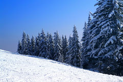 Winter fir wood. Snowy Christmas fir forest. Carpathians Stock Image