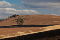 Winter Firebreaks  Dry Landscape. The burned grass for firebreaks give a stunning contrast against the hills and dry grass on the landscape during a dry African Royalty Free Stock Image