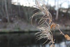 Winter Fireweed durch den Kanal stockbild