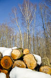 Winter firewood stack in forest Royalty Free Stock Photos