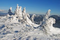 Winter  firs under snow Stock Photos