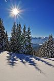 Winter  firs under snow Royalty Free Stock Images