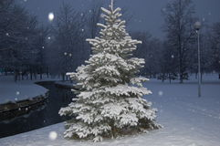 Winter firtree. Studded with snow in night Royalty Free Stock Images
