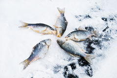 Winter fishing Stock Image