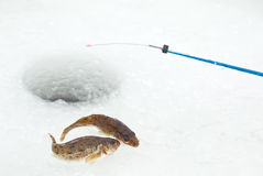 Winter fishing. Closeup of ice hole, fishing rod and ruffs Stock Image