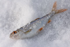 Winter fishing Royalty Free Stock Images