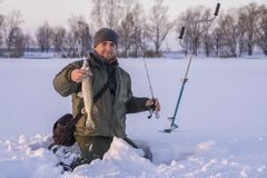 Winter fishing concept. Fisherman in action with trophy in hand. Catching pike fish from snowy ice at lake. Winter fishing background. Fisherman in action with stock photo