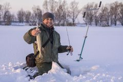 Winter fishing concept. Fisherman in action with trophy in hand. Catching pike fish from snowy ice at lake. Winter fishing background. Fisherman in action with stock photos