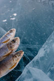Winter fishing on the lake. Royalty Free Stock Images