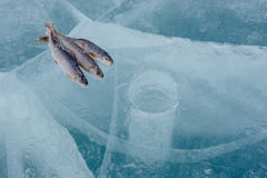 Winter fishing on the lake. Royalty Free Stock Photography