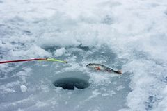 Winter fishing, rod and fish on ice near with ice hole Royalty Free Stock Images