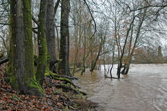 Winter flood. Muddy river overflowing its banks stock image