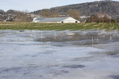 Winter Flooded Farm Land. Saturated farm land is covered with ice during a exceptionally wet winter Royalty Free Stock Photography