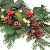 Winter-Flora Stockfoto
