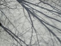Winter flora background Stock Photography