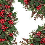Winter Flora Border Lizenzfreies Stockfoto