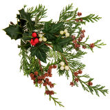Winter Flora and Fauna. Winter and christmas flora and fauna with holly, ivy, mistletoe with berry clusters and cedar leaf sprigs with pine cones over white royalty free stock images