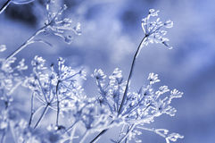 Winter floral background Stock Photos