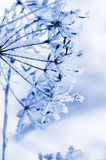 Winter floral background Stock Images