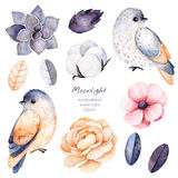 Winter floral collection with 11 watercolor elements. Beautiful winter collection with branches,cotton plants,flowers,little bird,colorful leaves,succulent royalty free illustration