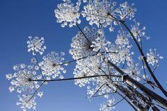 Winter flower royalty free stock photo