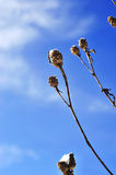 Winter flower branches Royalty Free Stock Images