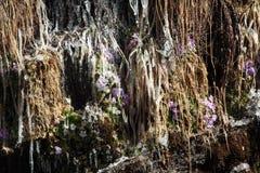 Winter flower of tibet Cuonalebu Gou Stock Images