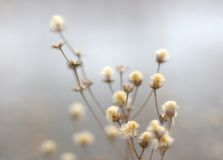 Free Winter Flowers Royalty Free Stock Image - 1473626