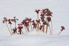 The Winter Flowers Stock Photography