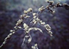 Winter flowers royalty free stock photos