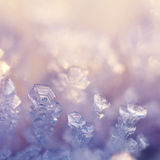 Winter Flowers. Extreme close up from hoarfrost Stock Photography