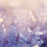 Winter Flowers. Extreme close up from hoarfrost and snowflake Stock Images