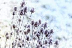 Winter Flowers stock photos