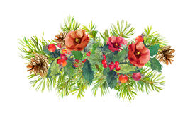 Winter flowers, fir tree, christmas mistletoe. Watercolor Stock Images