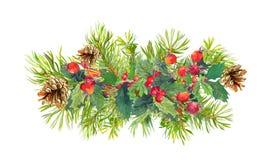 Winter flowers, fir tree, christmas mistletoe. Watercolor Stock Photo