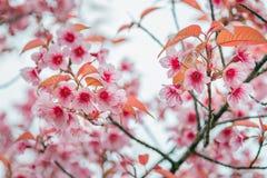 Winter flowers Stock Image