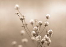 Winter flowers toned Stock Image