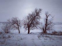 Winter-Flussufer Lizenzfreie Stockfotografie