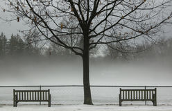 Winter Fog. Fog sets in the winter landscape in the park Stock Photography
