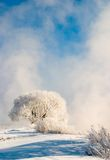 Winter fog Royalty Free Stock Images