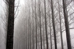Winter fog. Many trees lost in the fog Royalty Free Stock Photography