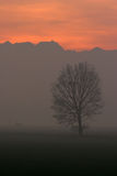 Winter fog. A trees lost in the fog with sunset light Royalty Free Stock Photos