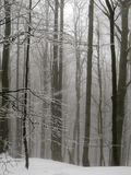 Winter fog forest in the mountain. Stock Images